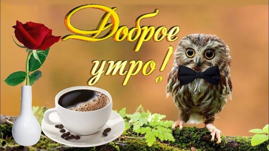 Доброе утро картинки открытки смешные прикольные бесплатно