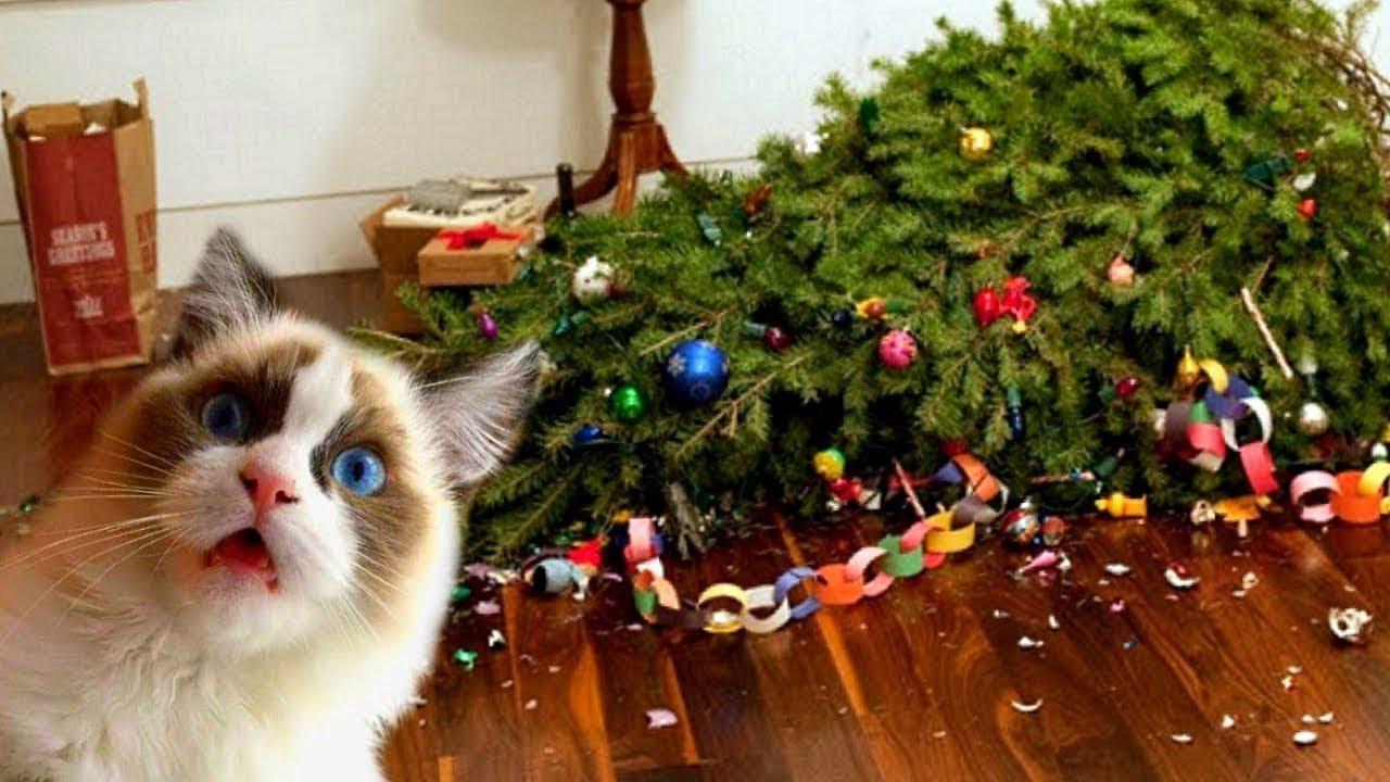 Приколы Новый год кошек елок как защитить