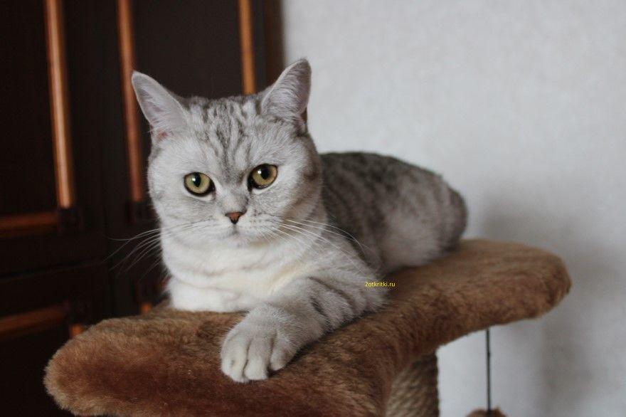 Всемирный день кошек 8 августа праздник